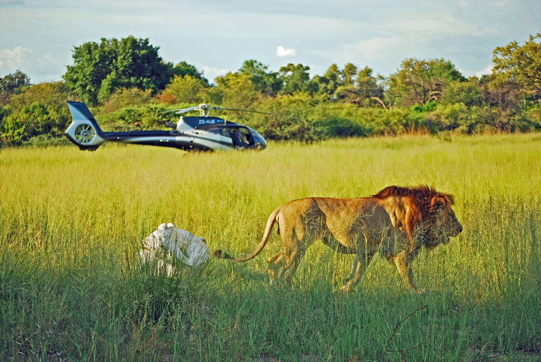Luxury African Travel - Safari